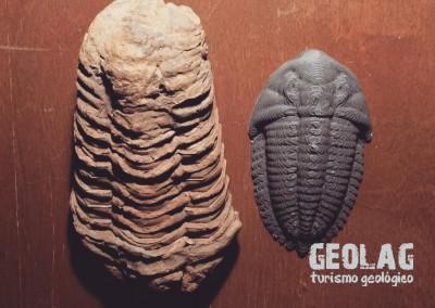 Trilobite 3D